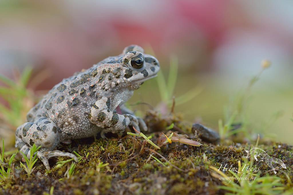 Amphibien&Reptilien;